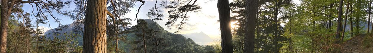 Verein Krisen- und Trauerbegleitung Schweiz